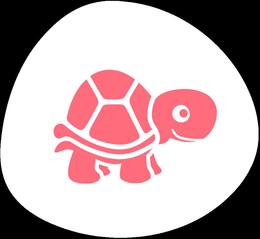 Kassiopeia die kleine Schildkröte